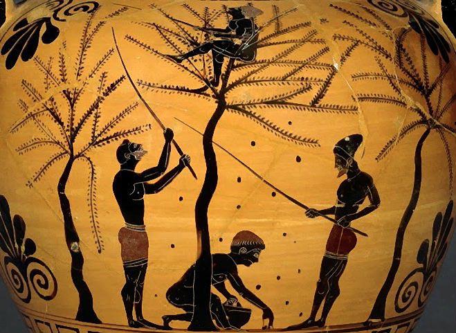 Оливковое масло. в древности и сегодня