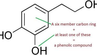 Антиоксиданты оливкового масла и их польза для здоровья